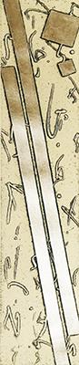 『Fuyu』中澤愼一/Nakazawa Shinichi